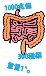 腸のイメージ